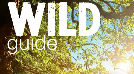 Image of Wild Guide: Devon, Cornwall and the South-West with Daniel Start