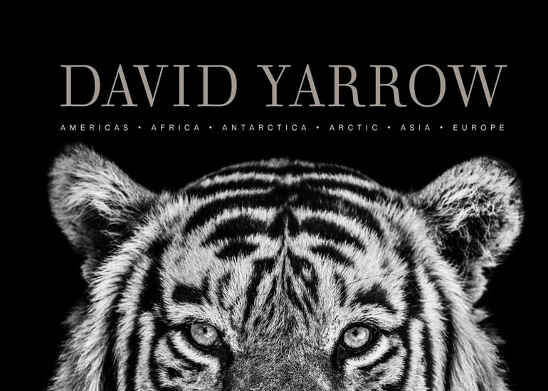 Image of Photographer David Yarrow